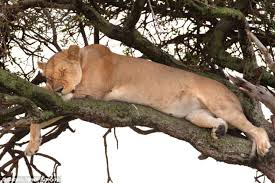 cat sleeping on branch2