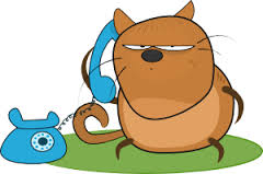 cat talking on phone