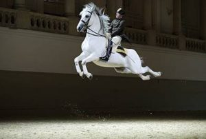 Spanish Riding School - merging with a horse while riding.