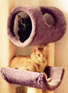 Viggo and Aiden sharing their cat tree.