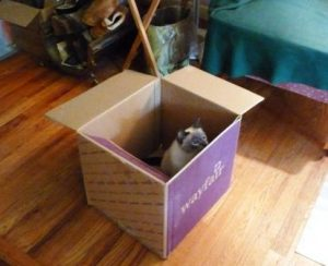 Starlight in a box getting ready to pounce.
