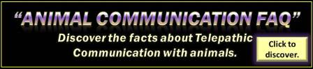 Animal Communication FAQ - Click to discover.