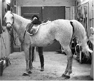 Energy Healing kept Echo healthy, vibrant, and under saddle throughout her twenties.